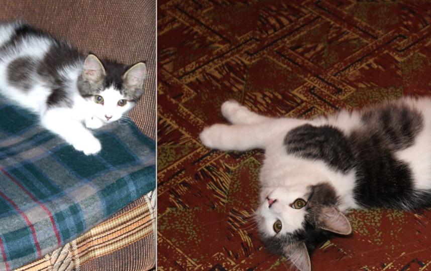 Вот фотографии нашего любимого кота в детстве и сейчас. Кота зовут Пушок, почти 2 года. Меня зовут Кригер Елена.