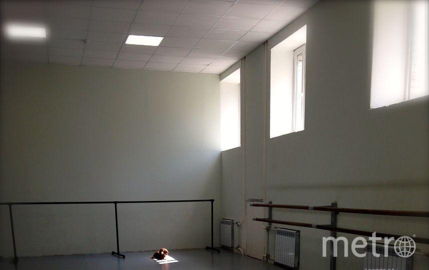 У нас балетная школа в Санкт-Петербурге - это тоже своего рода офис. Посылаем на конкурс фото - кошка Герда (красавица, охранница и борется с мышами, так как у нас первый этаж). Фото Владислав Курамшин и Татьяна Петрова