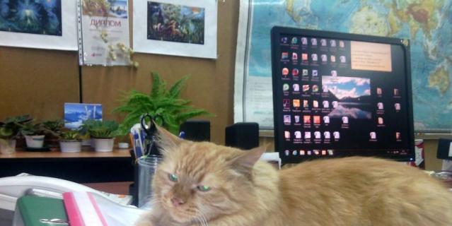 кошка Олимпия. Если без церемоний – Лимпа.