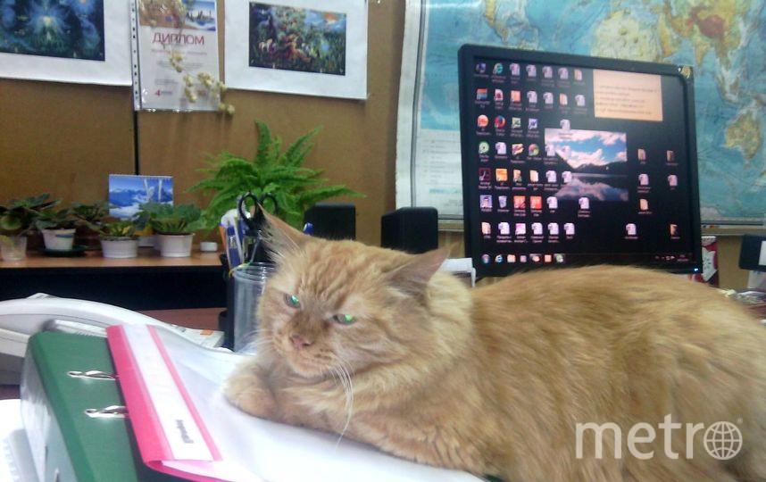 кошка Олимпия. Если без церемоний – Лимпа. Фото Журавлева Татьяна Леонтьевна