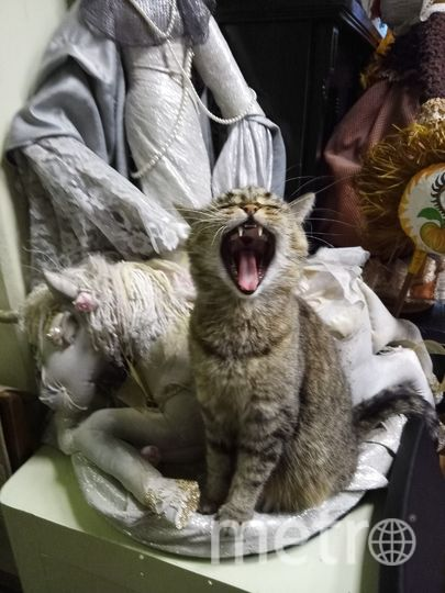Меня зовут кошка Кнопка! Я живу в Петербургском музее кукол. Люблю поспать в лучах солнца, на стульях в кабинетах музея, на коленях у смотрителей... в общем люблю поспать! =) Люблю общаться с посетителями. В том числе и с иностранцами, ведь мой кошачий язык - универсален! Обожаю охотиться в нашем саду на насекомых и не только. Иногда мне нравится побегать на перегонки с моей сестрой Ёжкой или обсудить последнюю выставку с коллегами из методического отдела.. Фото Администрация Петербургского музея кукол