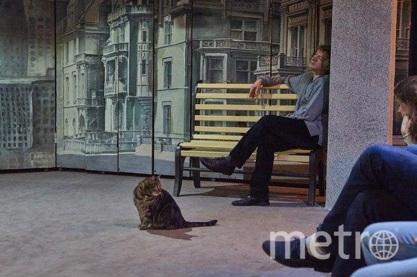 Федор выполняет и свои непосредственные кошачьи обязанности – охраняет Театр Дождей от мышей и любых нежелательных гостей. Так что он ещё и верный страж. Бывает, что Федор выступает и на актерском поприще и во время спектакля выходит на сцену сыграть свою роль. Зрители Театра Дождей очень любят такие моменты и даже появилась примета – если Федор вышел на сцену , значит спектакль удался! Фото Зритель Вероника Родкевич