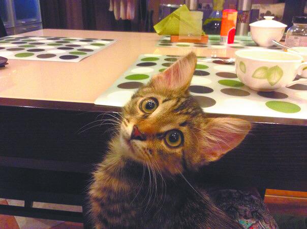 Кот Кузя в детстве. Фото Ирина Семёнова