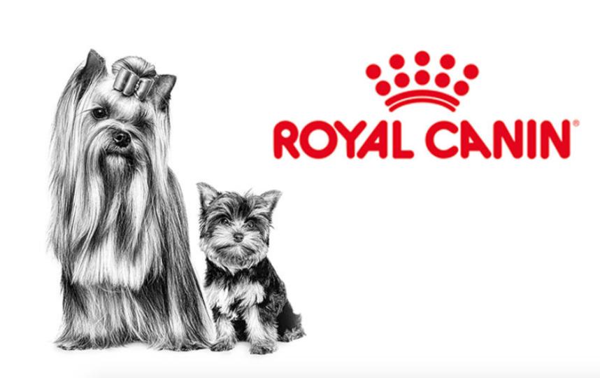 Главный победитель фотоконкурса был выбран голосованием сотрудников ROYAL CANIN.