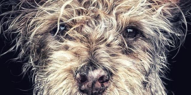 IPPAWARDS: Джанго, старый щенок.