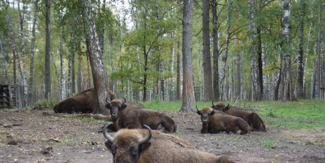 В заповеднике можно наблюдать за животными в их естественной среде.