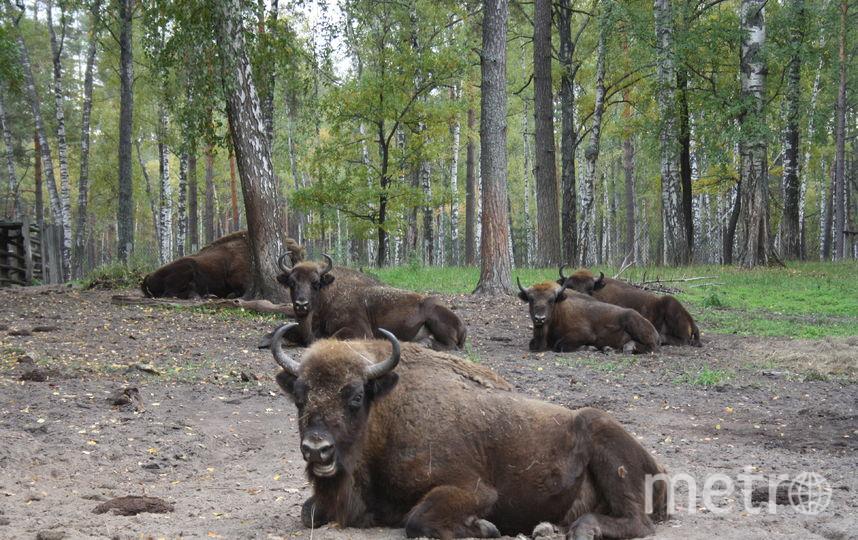 В заповеднике можно наблюдать за животными в их естественной среде. Фото предоставлено Информационно-аналитическим центром поддержки заповедного дела