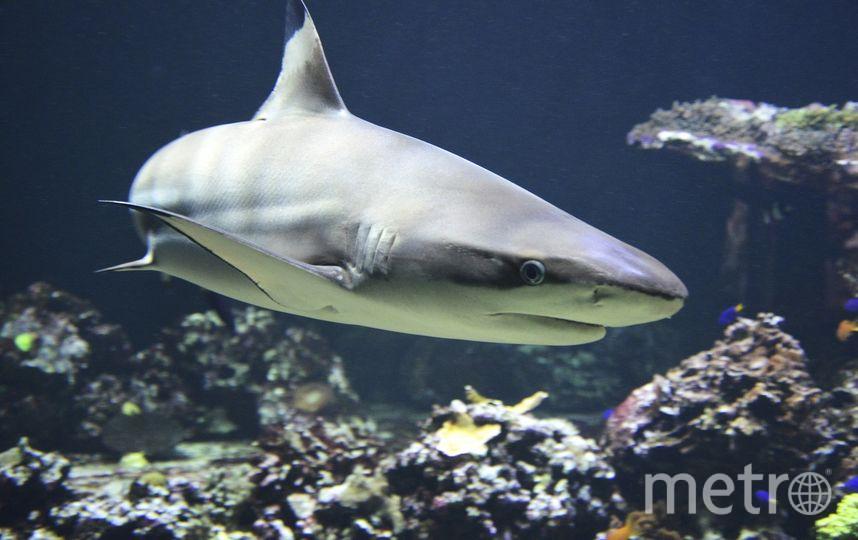 У берегов Флориды гигантская рыба проглотила акулу. Фото Pixabay.com