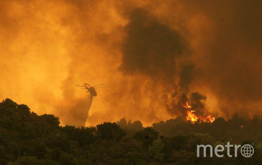 Страшные последствия пожаров в Греции. Фото Getty