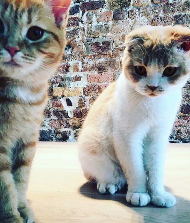 Музыкант Эд Ширан завел в Instagram аккаунт для своих котов. Фото скриншот www.instagram.com/thewibbles