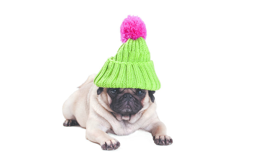 Для многих людей животные, будь то собаки или кошки, – главное в их жизни. Фото iStock