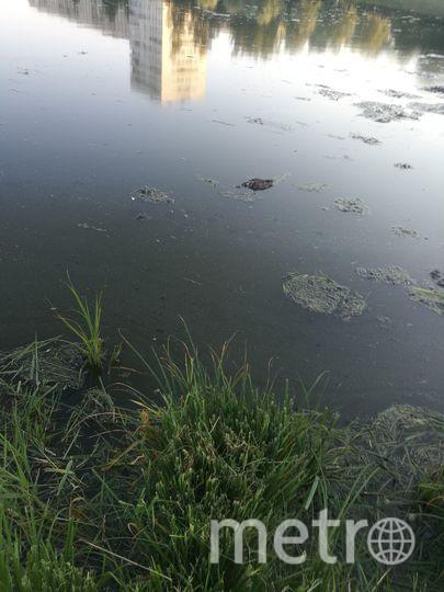 Погибшие в реке Новая утки. Фото ДТП и ЧП | Санкт-Петербург | Питер Онлайн | СПб, vk.com