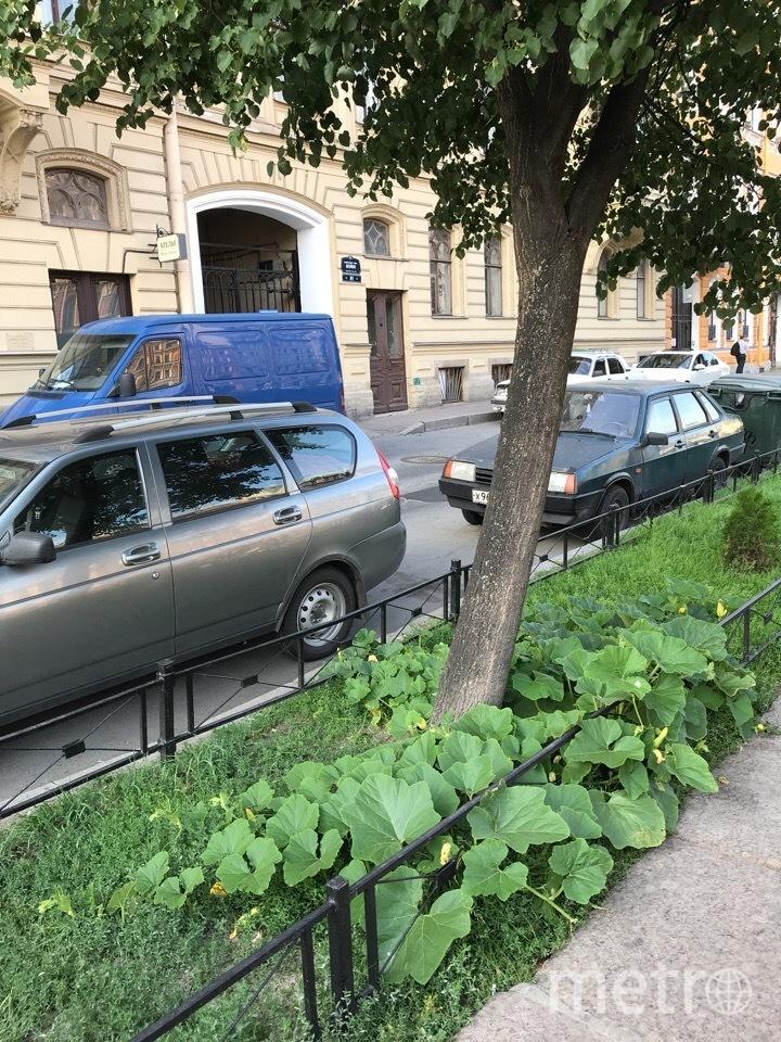 В центре Петербурга расцветает тыква. Фото Красивый Петербург, vk.com
