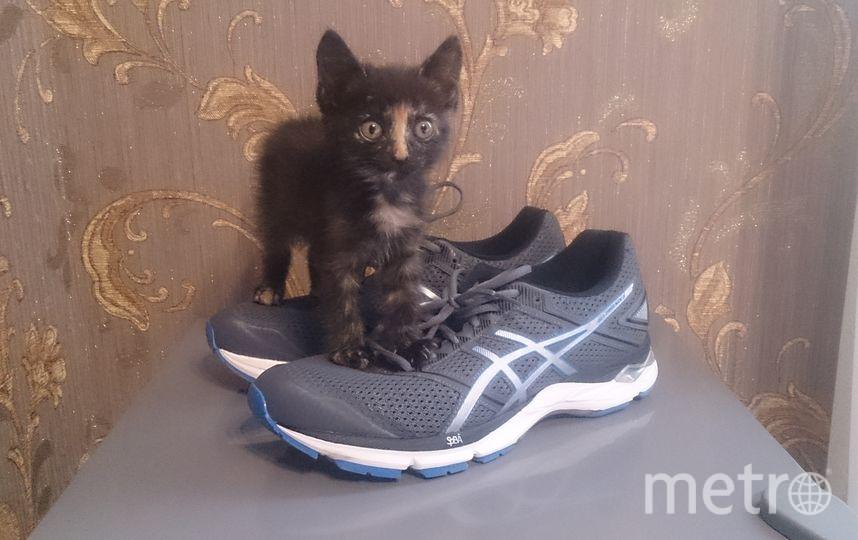 Мурлыка и новые кроссовки. Фото из личного архива Евгения Кутузова