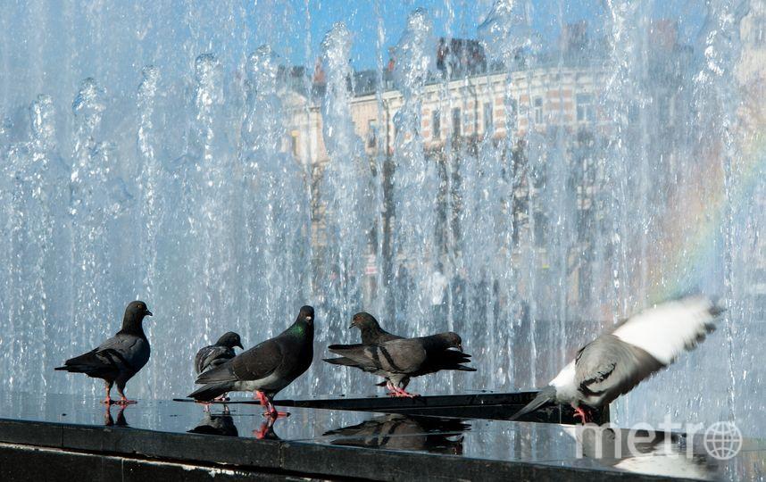 В Петербурге в День ВМФ отключали фонтаны. Фото Pixabay.com