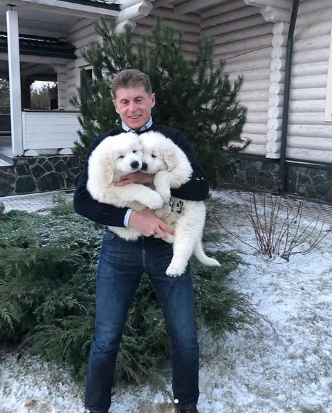 Олег Кожемяко и щенки породы маремма. Фото www.instagram.com/kozhemiako.oleg