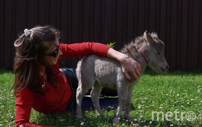 Гулливер, самый маленький в мире жеребенок миниатюрной лошади. Фото предоставлено организаторами международной конной выставки.