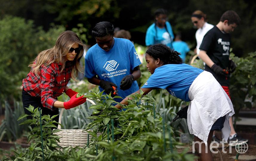 Мелания Трамп не часто наведывается в огород у Белого дома. Последний раз ее там заметили в октябре прошлого года. Фото Getty