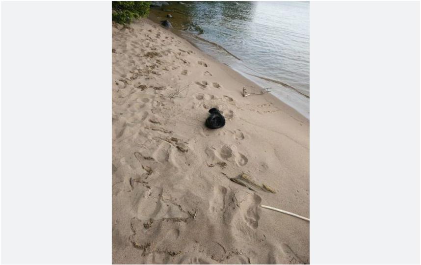 Таким нерпёнок был найден 5 июня. Фото ГУП «Водоканал Санкт-Петербурга»