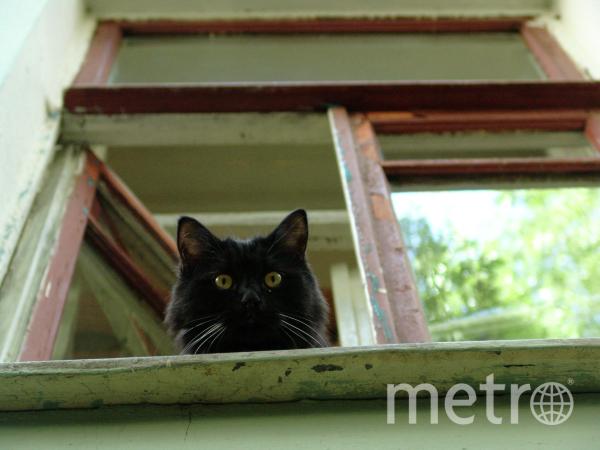 Похитительница кота Бегемота прокомментировала свой поступок. Фото РИА Новости