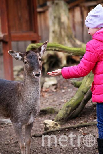 Чтобы стать биологом, одной любви к животным мало, надо учиться. Фото  pressfoto