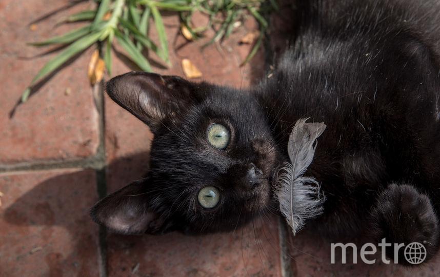8 августа празднуется день кошек. Фото Getty