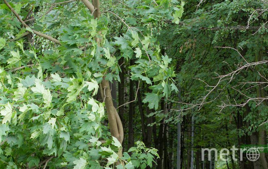 В Москве в Воронцовском парке нашли чемодан с трупом женщины. Фото Василий Кузьмичёнок