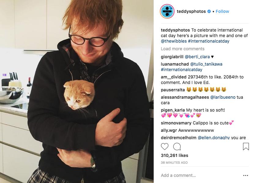 День кошек: самые известные котики Instagram'а. Фото Скриншот Instagram.