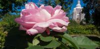 В Петербурге на огороде Петра I вырос суперурожай