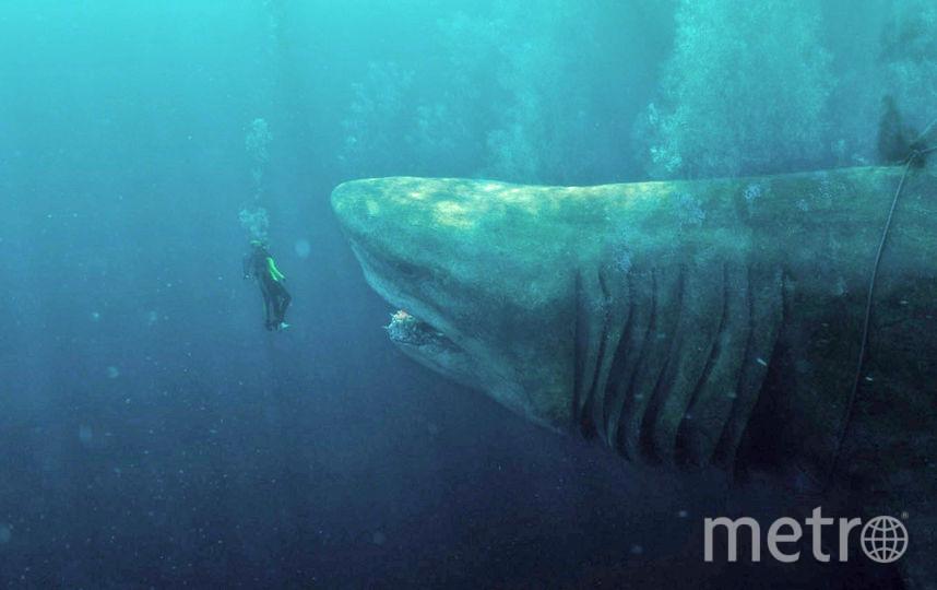 Размеры экранной акулы мегалодона шокируют. Представьте, каково аквалангисту. Фото warner bros.