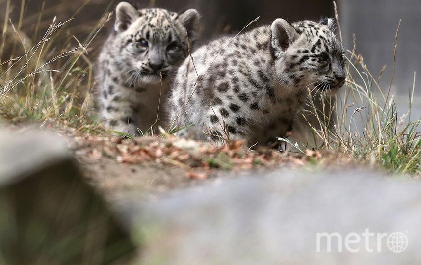 Малыши родились несколько недель назад. Фото Getty
