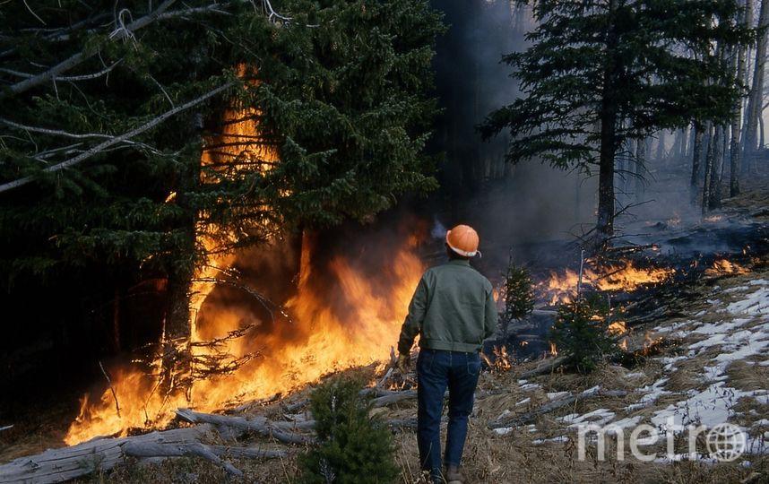 В Ленобласти тушиил пожары на территории 107 га. Фото pixabay.com