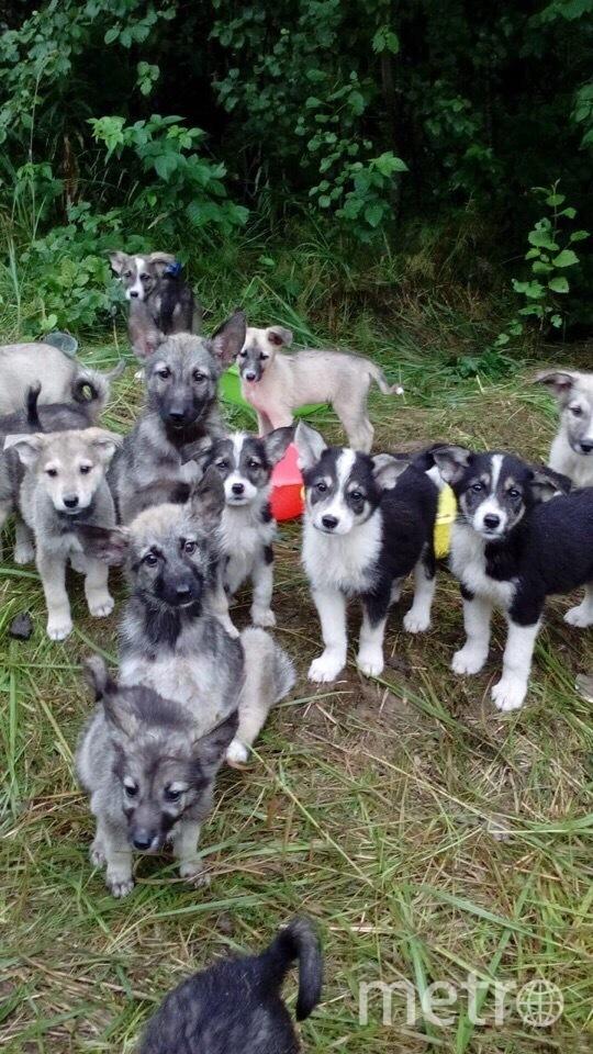 В Ленобласти неизвестный бросил 17 щенят на кладбище. Фото vk.com/club170019743, vk.com
