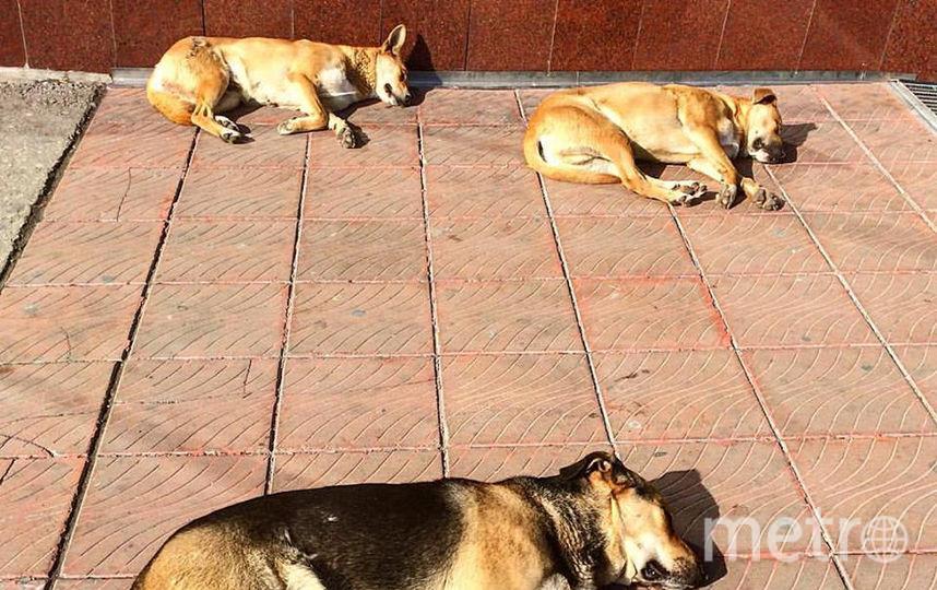 """Собак и кошек в Тольятти необходимо содержать по правилам. Фото Егор Важнов, """"Metro"""""""