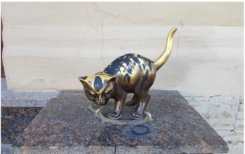 """В мае хулиганы облили котенка Фунтика. Фото предоставлено """"Республикой кошек""""."""