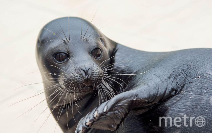 Тюлени могут стать неофициальным символом Петербурга. Фото vk.com/sealrescue, vk.com