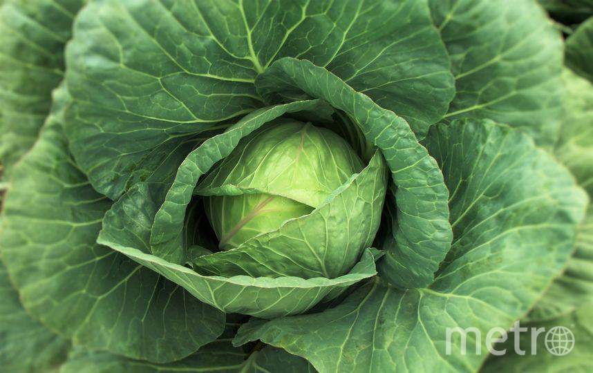 Индол-3-карбинол - вещество, вырабатываемое при употреблении в пищу белокочанной и кудрявой капусты, а также брокколи. Фото Pixabay