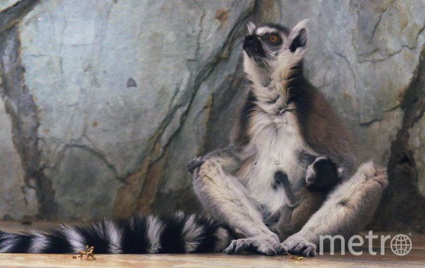 День рождения Ленинградского зоопарка. Фото Ленинградский зоопарк