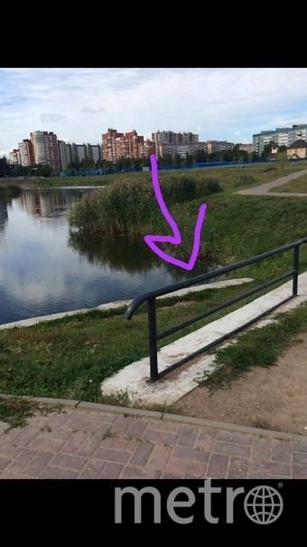 Еще одна черепаха была найдена в Приморском районе 15 августа. Фото vk.com/sosedi_kvartala, vk.com