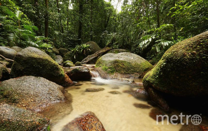 Джунгли Австралии. Фото Getty