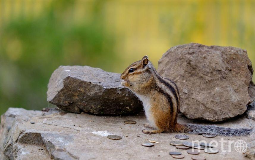 """Каждое утро на священных камнях скалы можно заметить бурундука. Фото Алена Бобрович, """"Metro"""""""