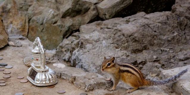Каждое утро на священных камнях скалы можно заметить бурундука.