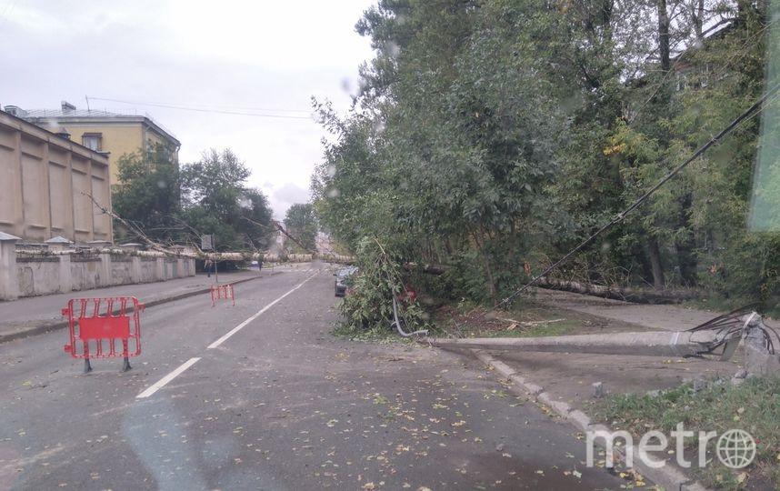 За сутки ветер повалил 194 дерева. Фото ДТП и ЧП | Санкт-Петербург | vk.com/spb_today., vk.com