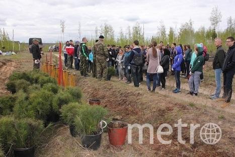 Силами волонтёров было посажено более 10 миллионов саженцев в 47 регионах России,создано 5 000 школьных питомников. Фото Предоставлено организаторами
