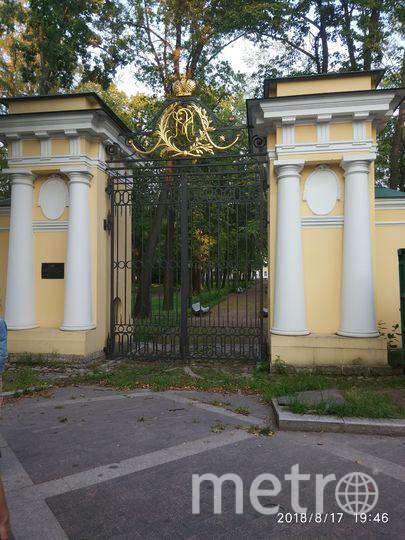 Необычные пешеходные маршруты Петербурга: гуляем у Чёрной речки.