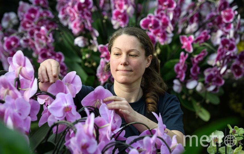 Орхидеи. Фото Getty