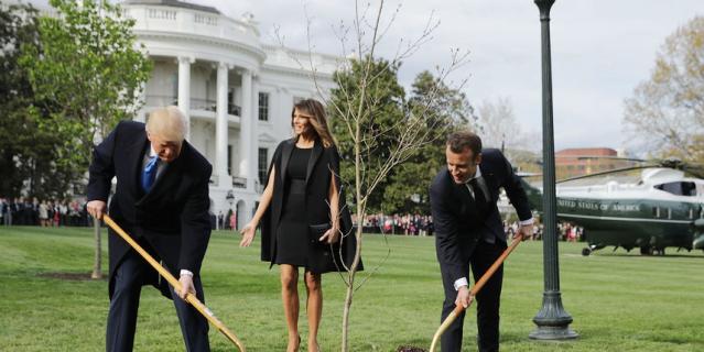 Дуб Мелания Трамп сажала и с президентом Франции.