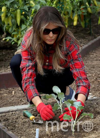 Работы в саду Белого дома. Фото Getty