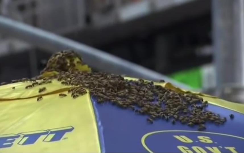 Нашествие пчел в Нью-Йорке. Фото скрин-шот