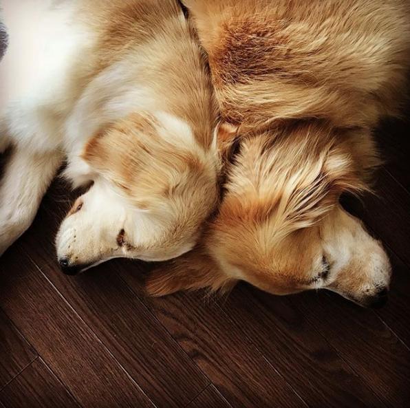 Джилл и Лотта. Фото Скриншот Instagram: akikoujill